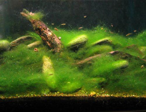 Forebyggelse af alger